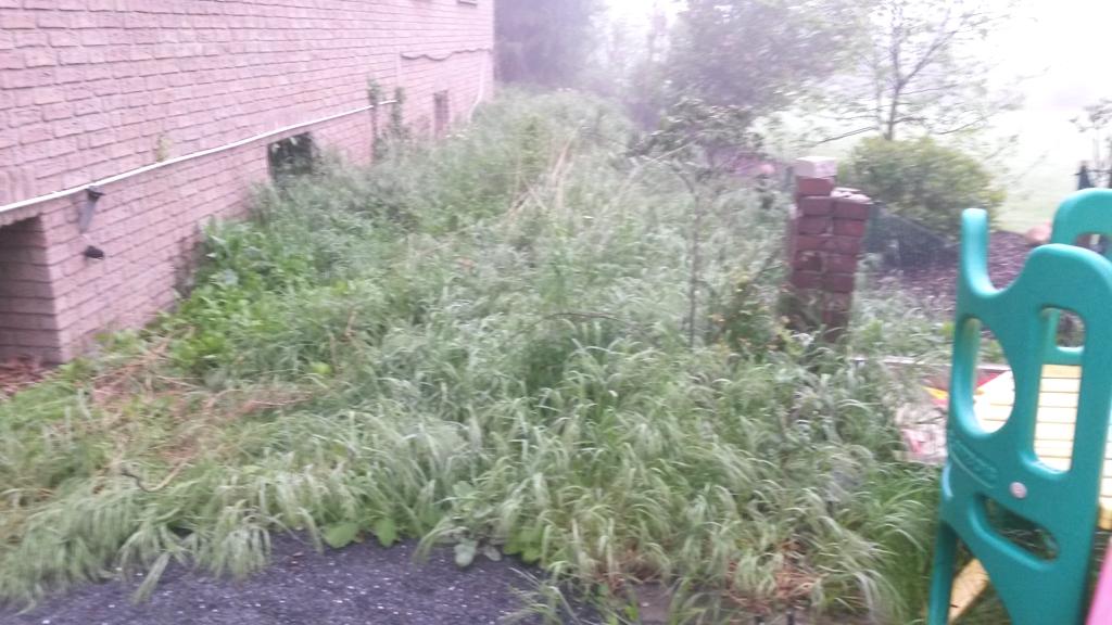 Eine ungepflegte Grünfläche neben dem Haus, Wir gestalten diese für Sie um.