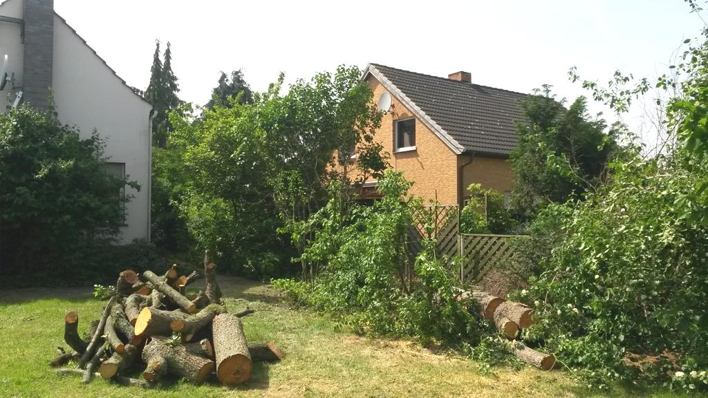 Der Arbeitsplatz nach der Fällung der Bäume, nichts ist beschädigt worden. Das Stammholz verbleibt beim Kunden.
