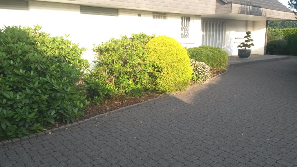 Zu groß gewordene Pflanzen im Eingangsbereich