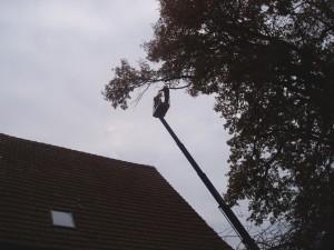 Wir übernehmen auch Problemfällungen sowie Baumpflegemaßnahmen für Sie. Hier mit Hilfe einer Hubarbeitsbühne.