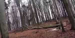 Wir scheuen uns nicht vor großen Bäumen. Hier sehen Sie uns bei der Arbeit im Forst. Der Baum hatte einen Durchmesser von ca 80cm. Die unteren Stammenden ergaben insgesamt 8 Raummeter Brennholz. Alleine das Kronenmaterial wird ca nochmal 10 Raummeter ergeben. Schade ist es solche Bäume zu fällen, aber der Nachwuchs braucht Platz.