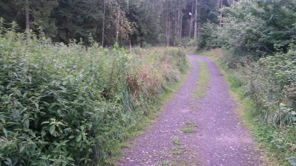 Forstwirtschaftliche Wege dienen oftmals auch Wanderern dazu die Natur zu erforschen. Leider sind diese Wege selten gepflegt. An unseren Waldgrundstücken sorgen wir regelmäßig für den nötigen Durchblick.